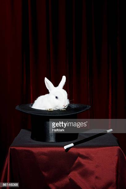 A rabbit in a top hat with a magic wand nearby