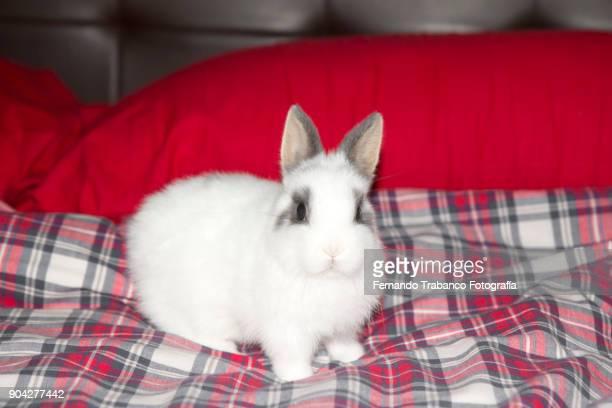 Rabbit in bed