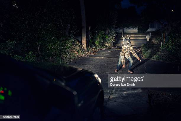 Rabbit in headlights