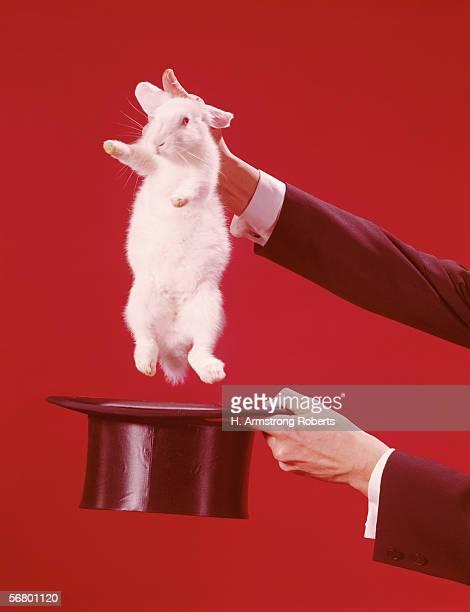 Rabbit in magician's top hat