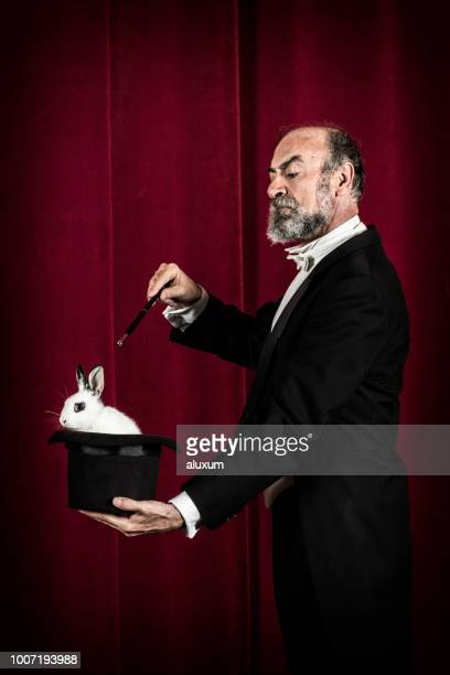rabbit in tophat of magician - top hat stock pictures, royalty-free photos & images