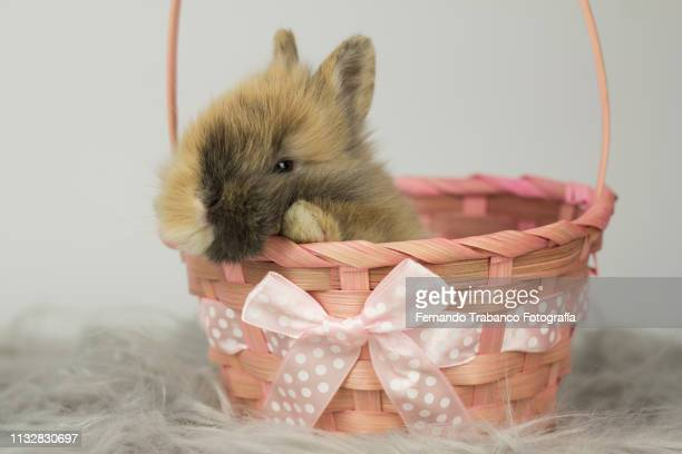 Rabbit inside a basket