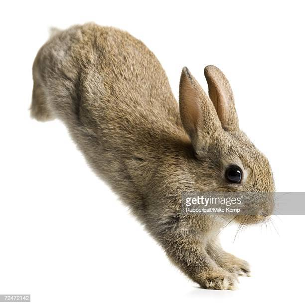 rabbit jumping - hare stock pictures, royalty-free photos & images