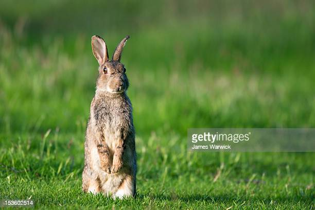 Image result for rabbits getty images