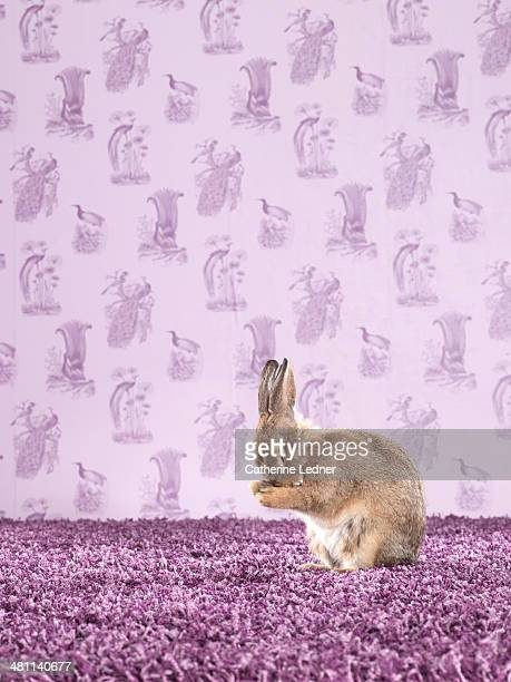 Rabbit on Carpet and Wallpaper