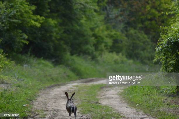 Rabbit On Dirt Road At Forest