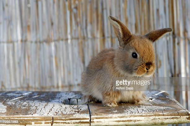 rabbit on table - easter bunny stock pictures, royalty-free photos & images