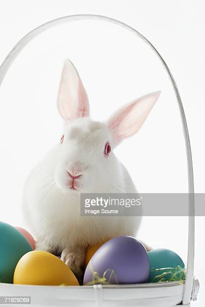 Rabbit on top of a basket of eggs