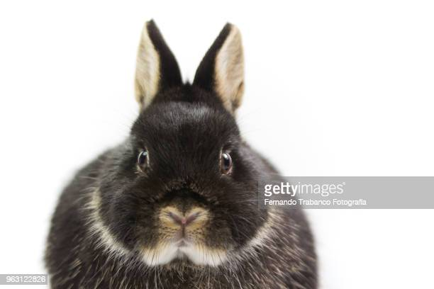 rabbit on white background - lapin photos et images de collection