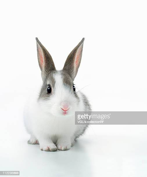 a rabbit - one animal stock pictures, royalty-free photos & images
