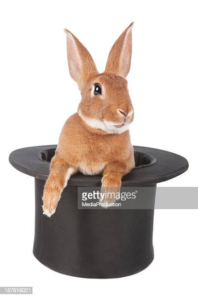 rabbit - hat stock photos and pictures