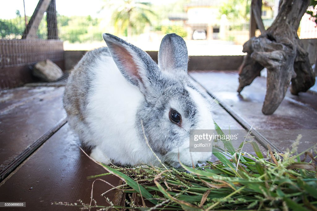 Rabbit : Stock Photo