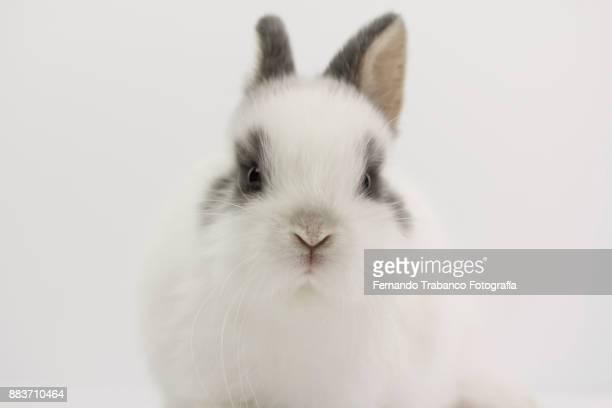 rabbit portrait - coniglietto foto e immagini stock