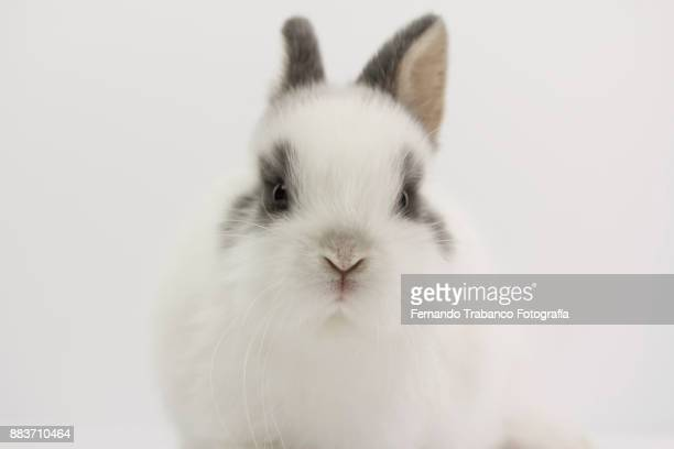 rabbit portrait - white rabbit stock pictures, royalty-free photos & images