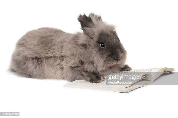 rabbit reading - rabbit animal stock pictures, royalty-free photos & images