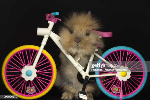 Rabbit riding a colorful bicycle