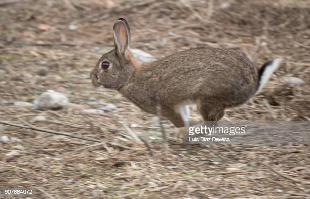 rabbit running - ウサギ肉 ストックフォトと画像