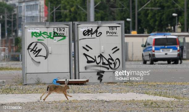 A rabbit runs over the grounds of the Cannstatter Wasen festival in Stuttgart southern Germany on May 9 prior to a demonstration against the...
