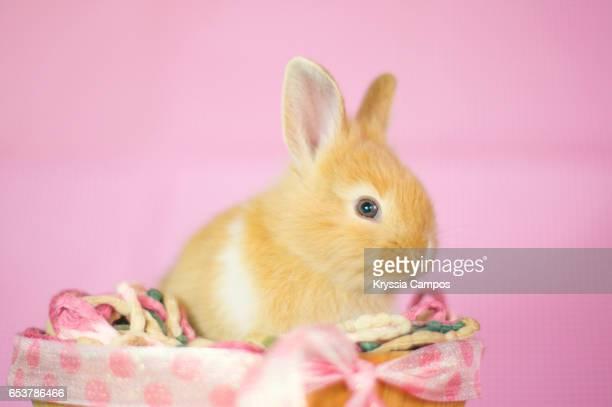 Rabbit sitting in a wooden basket