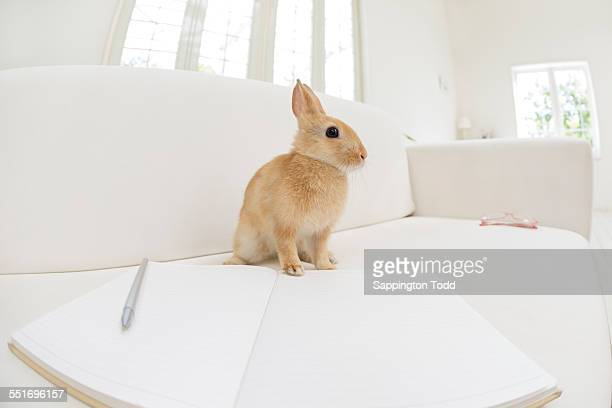 Rabbit Sitting On The Sofa With Book And Pen