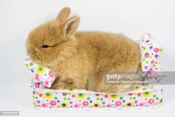Rabbit sleeping on the sofa