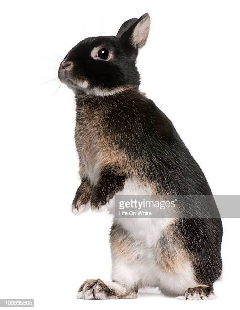 rabbit standing - domestic animals stock photos and pictures
