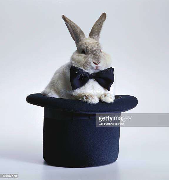 Rabbit with bowtie and top hat
