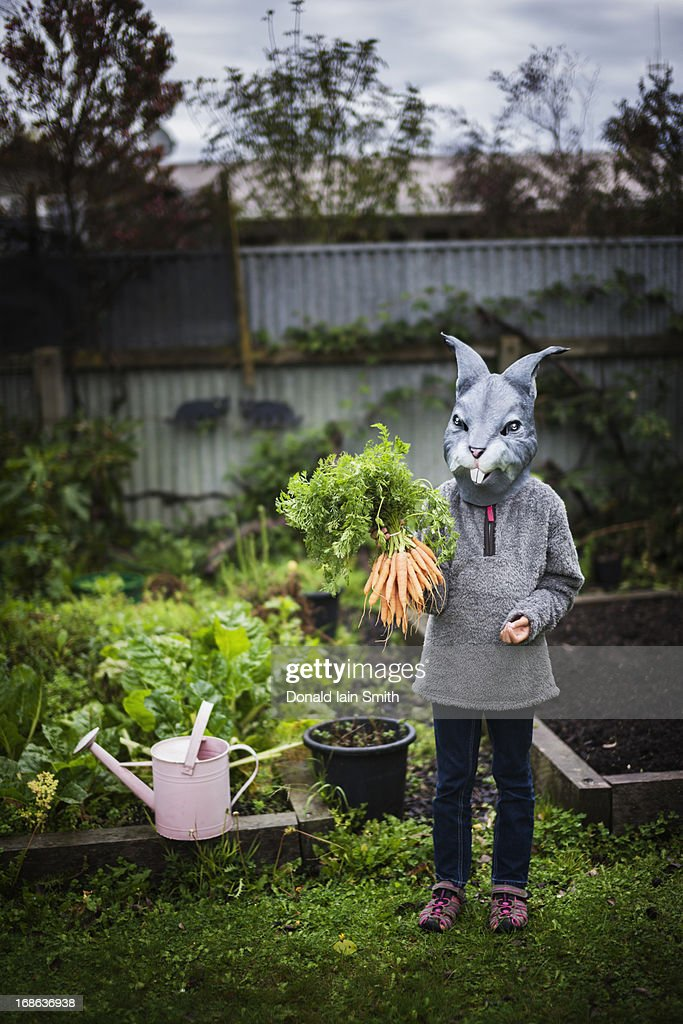 Rabbit with carrots : Stock Photo