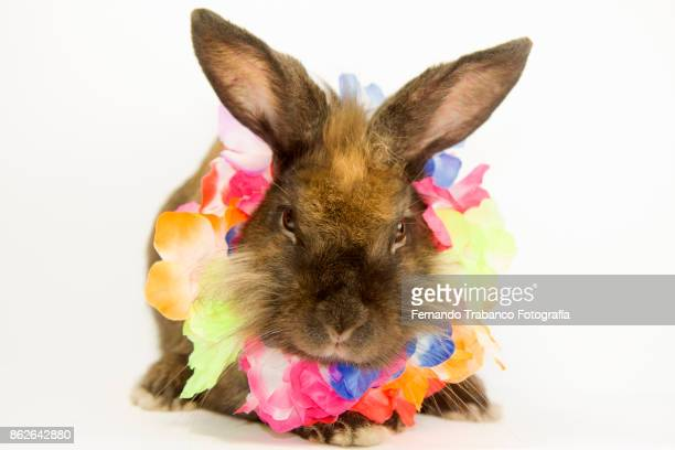 Rabbit with colorful flower necklace