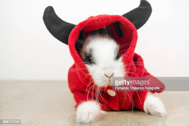 rabbit with devil costume - animal costume stock pictures, royalty-free photos & images