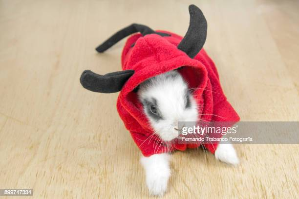 rabbit with devil costume - devil costume stock photos and pictures