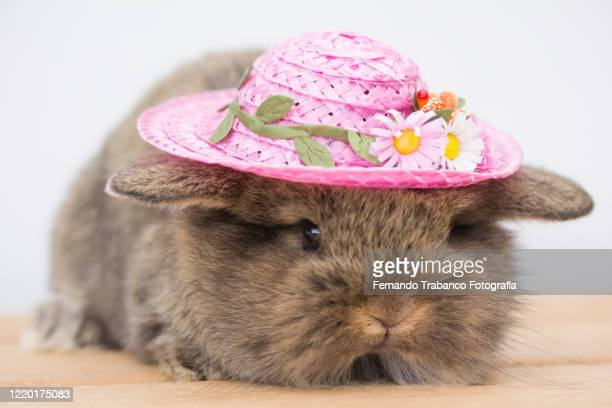 rabbit with flower hat - domestic animals stock pictures, royalty-free photos & images