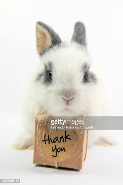 Rabbit with gift box