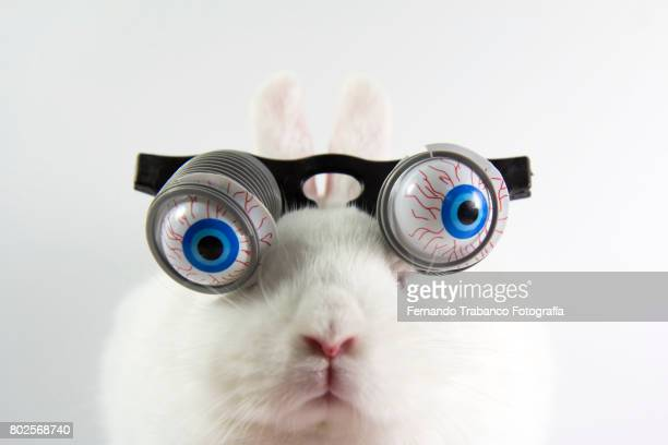 Rabbit with glasses and bulging eyes