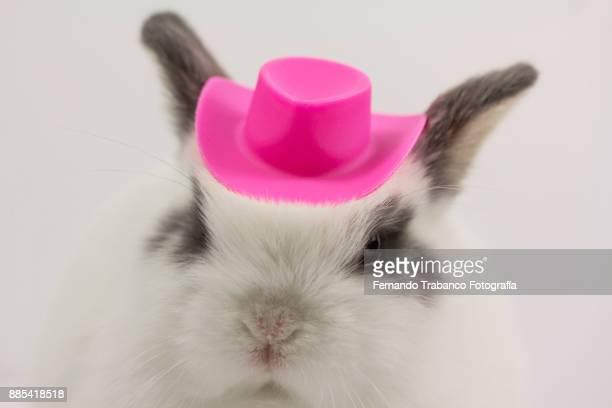 Rabbit with hat