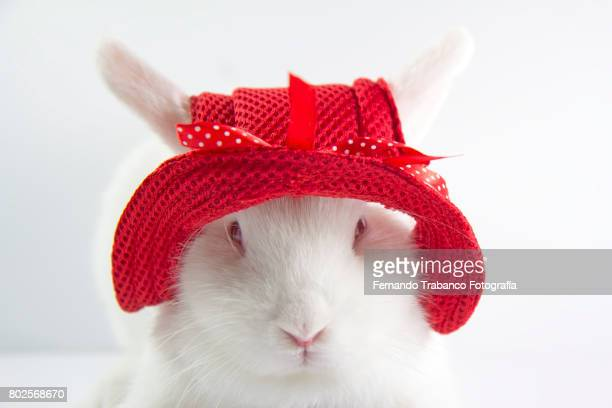rabbit with red hat - rabbit beach stock photos and pictures
