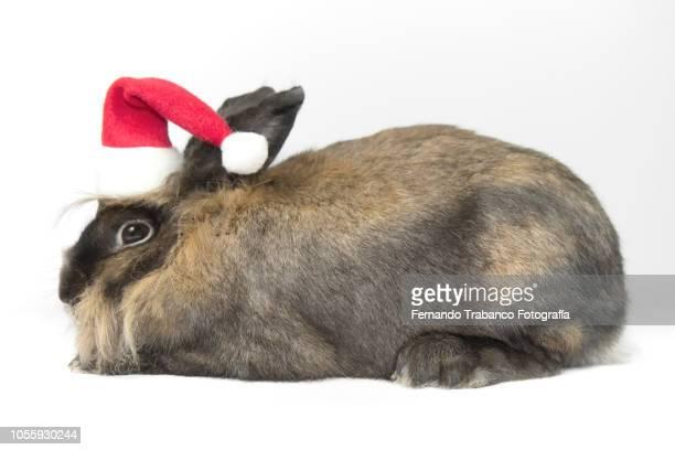 Rabbit with Santa hat