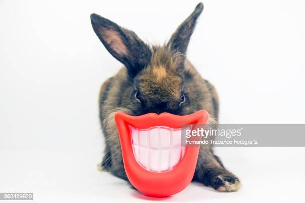 Rabbit with smile and open mouth showing teeth