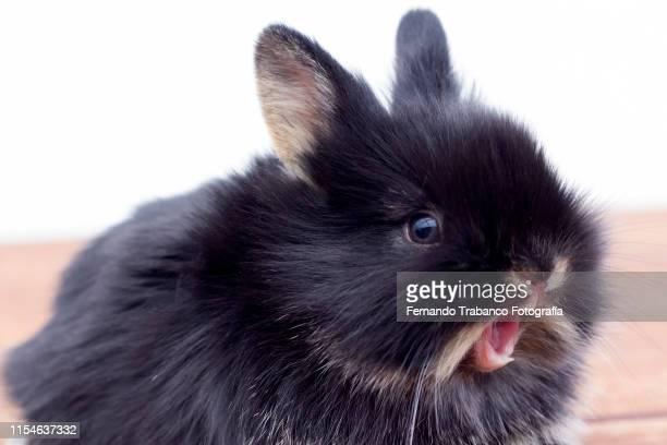 rabbit with surprise face - animali pasquali foto e immagini stock