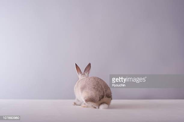 rabbit,animal,it is pretty