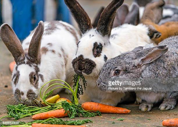 Cute Bunny Eating Carrot - Baby Rabbit - Cute Bunny Video - YouTube