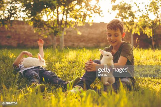 ウサギ、かわいい男の子