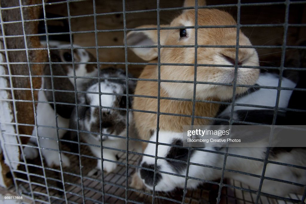 Rabbits are raised at a farm : Stock-Foto