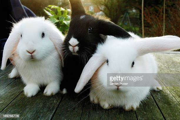 rabbits sitting on wooden deck - rabbit stock pictures, royalty-free photos & images
