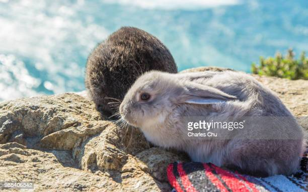 rabbits under sunshine - rabbit beach stock photos and pictures