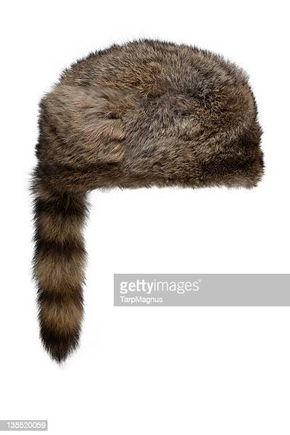 raccoon hat - fur hat stock photos and pictures