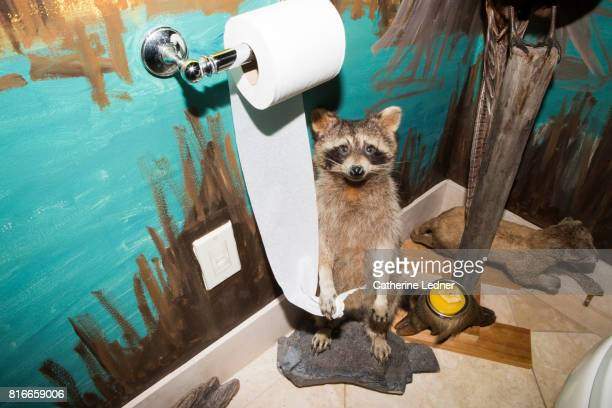 raccoon holding toilet paper in painted bathroom - funny toilet paper imagens e fotografias de stock