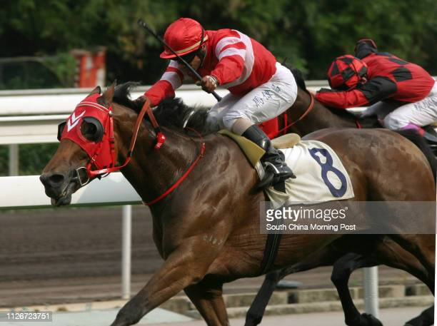 Race 8 No 8 Ho Choi ridden by Weichong Marwing wins the 1600m race of The Queen's Silver Jubilee Cup at Sha Tin Racecourse 24 May 2003