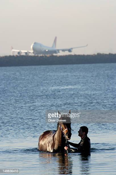 Race horse being taken for swim at Commonwealth Beach, Brighton-le-sands, with plane at Sydney airport in background.