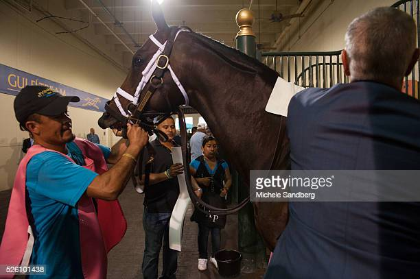 Race Horse Boisterous riding in The 32nd Running of The Gulfstream Park Turf Handicap Horses and Horse hands getting ready for the race